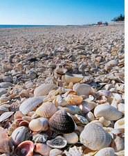shells_beach